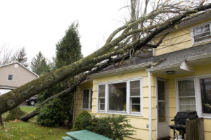 Emergency Tree Removal Services in Jacksonville - Call (910) 218-9959 24/7