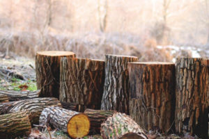 Jacksonville Tree Services and Stump Grinding