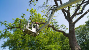 Tree Trimming Services in Jacksonville, North Carolina - (910) 218-9959