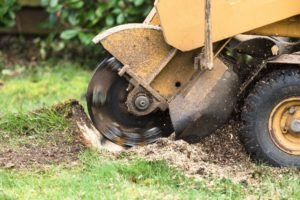 Stump Grinding and Stump Removal in Jacksonville - Tree Service Pros Jacksonville